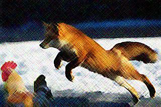 horoz-tilki